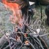 キャンプで焚き火のコツは?薪の種類や薪の組み方、焚き火台のご紹介!