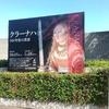 国立西洋美術館にて「クラーナハ」展、「ドニの素描」展 1月15日までです