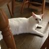 猫の紹介~シロ&のん~