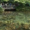 モネの池とあじさい街道を行く@岐阜県関市(その①)