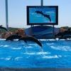 イルカやアシカショーも楽しい!アドベンチャーワールドに行ってきた