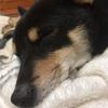 うちの犬の寝方がおかしい