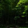 森林の・・・