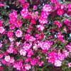 冬の花は総じて色彩濃厚なものが多い