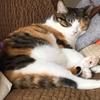 【愛猫日記】毎日アンヌさん#75