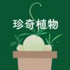 珍奇植物はいいぞ。オーニソガラム・ジュンシフォリウムの花と育て方