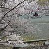 春めき桜と静嘉堂文庫の国貞展示替え