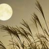 京都 観月ノススメ 今年(2019年)は、9月13日(金)が「仲秋の名月」です。