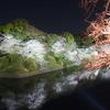 幻想的な夜桜風景『千鳥ヶ淵ライトアップ』