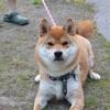散歩帰りの迷犬「アツシ」の初撮影😊