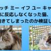 『キャッチ ミー イフ ユー キャン2』に反応しなくなった猫、本当に飽きてしまったのか検証してみた