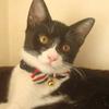 今日の黒猫モモ&白黒猫ナナの動画ー545