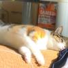【愛猫日記】毎日アンヌさん#87