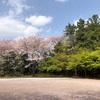 桜の宴。東漸寺(とうぜんじ)と喫茶ひとつぶ