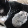 実は「仲むつまじい猫とネズミ」がいる