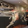 恐竜が大好きな子供たち集まれ~長居公園内の大阪市立自然史博物館に恐竜の化石を見に行こう!