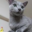 我が家に猫がいる : ロシアンブルーとの生活