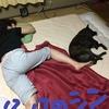 甲斐犬サンのシンクロシリーズ〜しんくろないずデスカッ(=´∀`)人(´∀`=)⁇