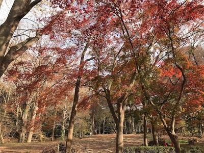 代々木公園ランニング〜紅葉ももうすぐ終わり、ランニング手袋が必要な季節になりました〜