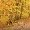 森の中の二つの道