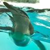 写真でめぐる名古屋港水族館 4『ペンギン』