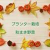 【プランター栽培】秋まきの二十日大根お試し収穫&マイペースなオクラの様子