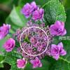 両性花と装飾花:アジサイのうんちく