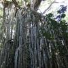 【2歳児連れ】2012年夏オーストラリア・ケアンズ旅行記①〜初めての子連れ海外旅行