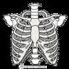 肺をヨイショする横隔膜と肋骨の動き