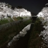 写真で見る!2019年山崎川の桜ライトアップ