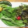 完全無農薬の家庭菜園。野菜がこんなに愛らしく尊いとは…!