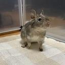 うさぎ・デグー・ハムスター飼いの小動物大好きブログ