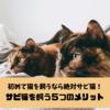 【初めて猫を飼うなら絶対サビ猫!】オススメする5つのメリットとサビ猫との出会い方