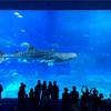 【美ら海水族館】空港から2時間かかるアクセスは、現地ツアーで解決!