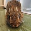 ウサギのちまき今日の1枚『ナデられ体勢』