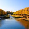 イチョウ並木の黄葉 国営昭和記念公園