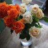Rose &Rose