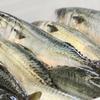 Benoit特選食材「南三陸志津川漁港より≪マサバ≫」のご案内です。