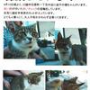 ☆☆迷い猫さん☆☆