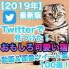 【2019年最新版】Twitterで見つけた猫の可愛い&おもしろ動画像まとめ100選【ツイッター】