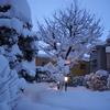 積雪は74㎝になりました