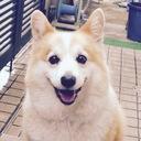 datumikkabozu's blog