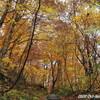 秋の東北旅⑤ 念願の白神山地へ