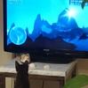 【将棋x猫】女流猫棋士を目指す弟子の子猫に名前を付けた