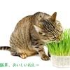 猫の腸を健康に育てるサプリ【ねこファイン】がいい