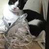 """元保護猫の子猫""""おもち""""がとうとう懐いた?!"""