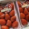 栃木のスカイベリーはイチゴの領域を超えた!
