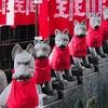 お狐さまのお話。豊川稲荷@赤坂見附。