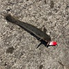 みんなの北海道釣り情報【小樽市色内埠頭付近】ついにハゼのシーズンか?!使用した仕掛けはお馴染みのアレ!