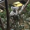 1月3日のお話し。。東山動物園から奈良へ。。